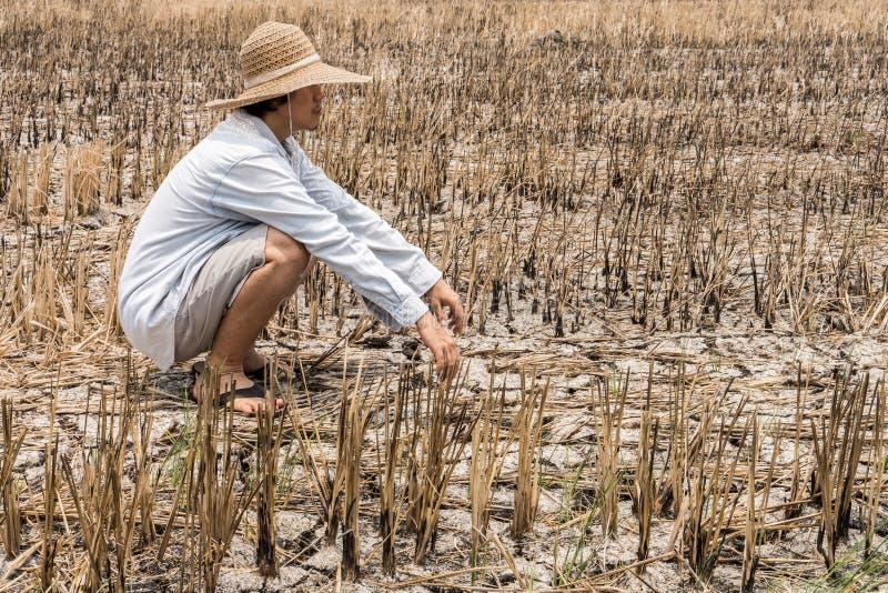 Pauvre agriculteur dans un domaine de riz pendant la longue sécheresse image libre de droits