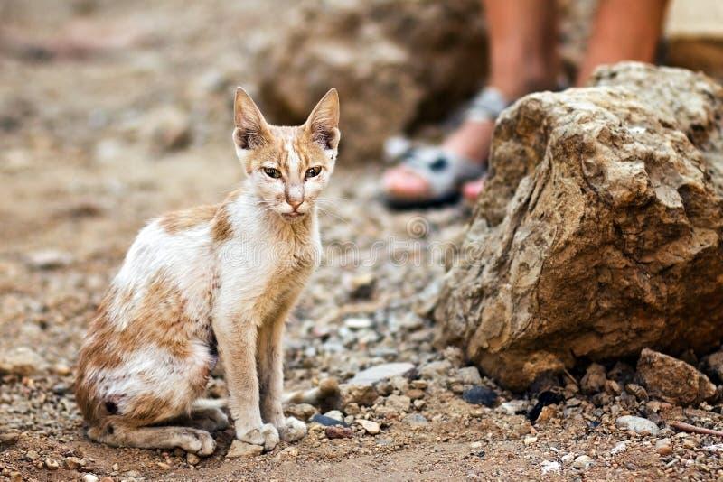 Pauvre chat image libre de droits