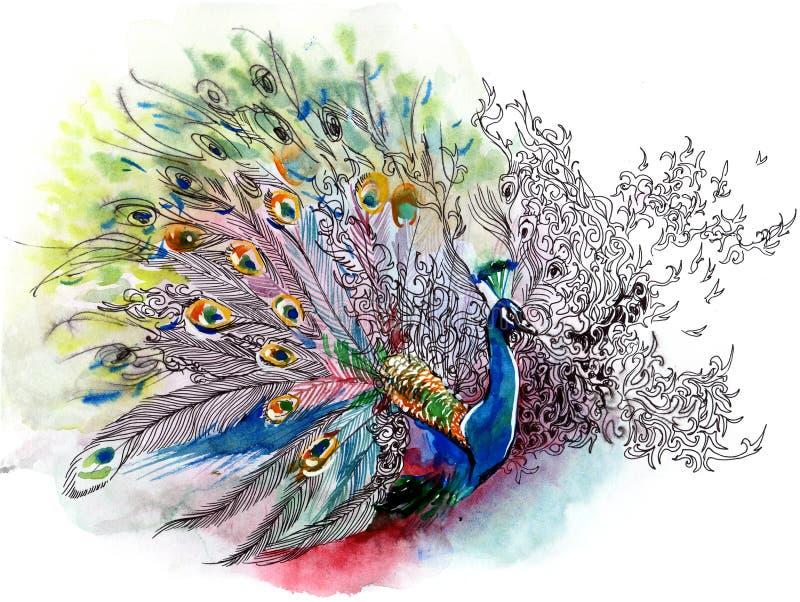 Pauw royalty-vrije illustratie