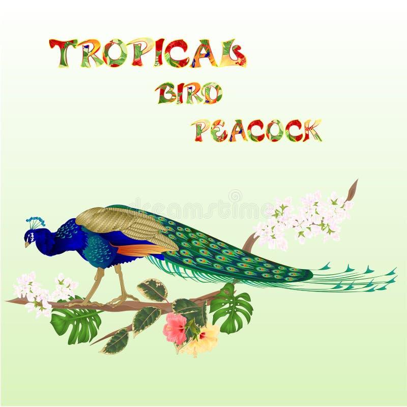 Pauw tropische vogel op tak met ficus en hibiscus en philodendron waterverf uitstekende vector editable illustratie stock illustratie