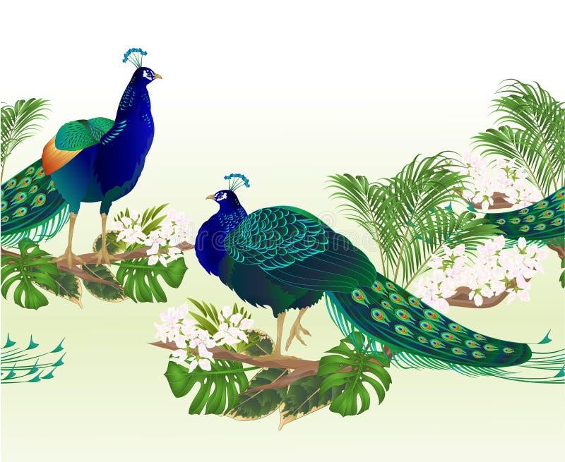 Pauwen grens de naadloze van achtergrondschoonheids exotische vogels en de tropische uitstekende editable vectorillustratie van d vector illustratie