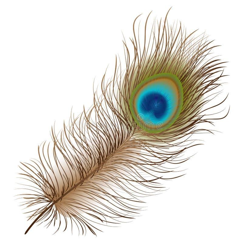 Pauwveer vector illustratie