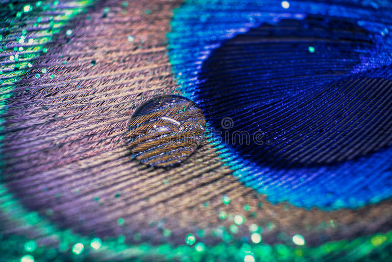 Pavão colorido da pena com bokeh das gotas e das luzes da água Concentrado foto de stock royalty free