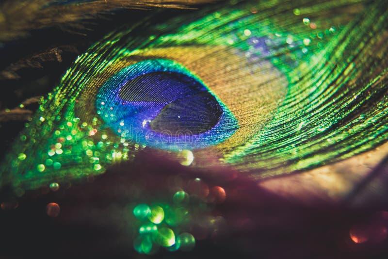 Pavão colorido da pena com bokeh das luzes Conceito da paz fotografia de stock royalty free
