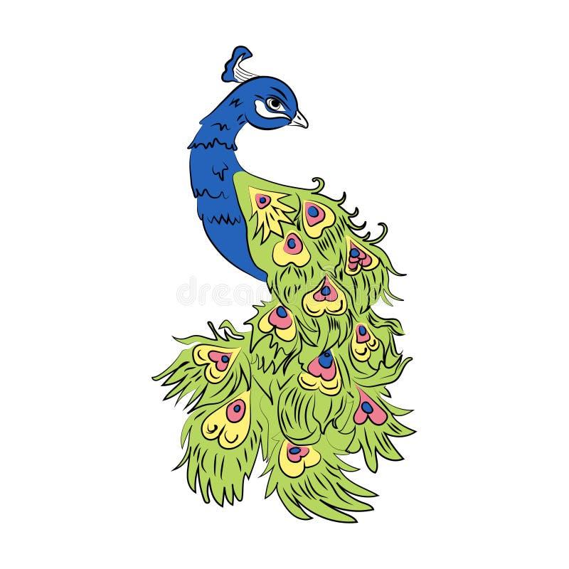 Pavão colorido vetor ilustração stock