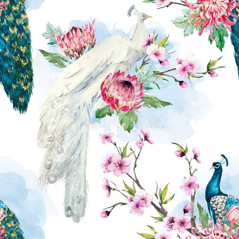 Pavão do vetor da aquarela e teste padrão de flores ilustração royalty free