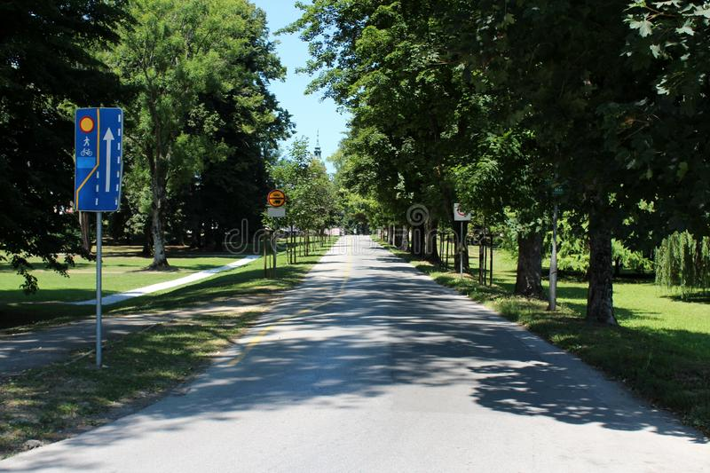 Paved alley with bicycle track surrounded with tall old trees and freshly cut grass in local public park stock images