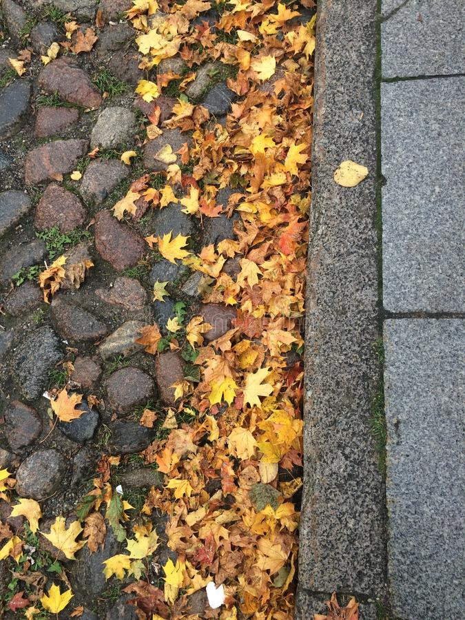Detail of paved floor in autumn. Paved floor of reddish tones, fallen leaves of yellow tones and gray of the curb of the sidewalk. In vertical alienation stock photos