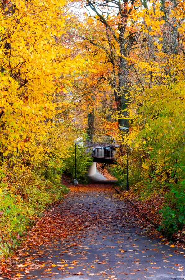 Paved pathway through a city park trees autumn royalty free stock image