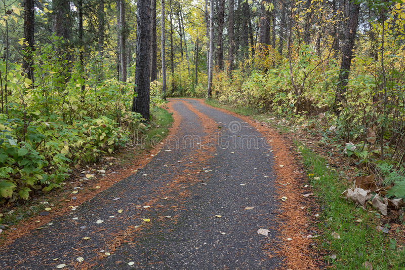 Paved pathway through a forrest royalty free stock photo