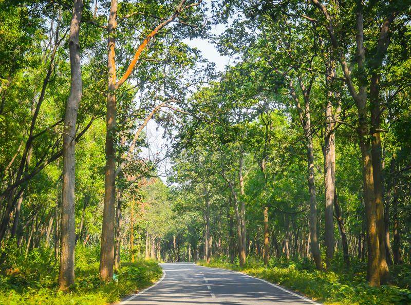 The paved road that cuts through the forest of fresh green tree royalty free stock image