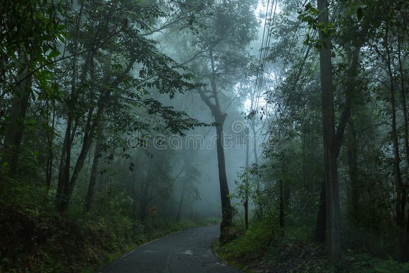 Paved road in the rainforest. Morning raining day with paved road in the rainforest on the mountain stock photography