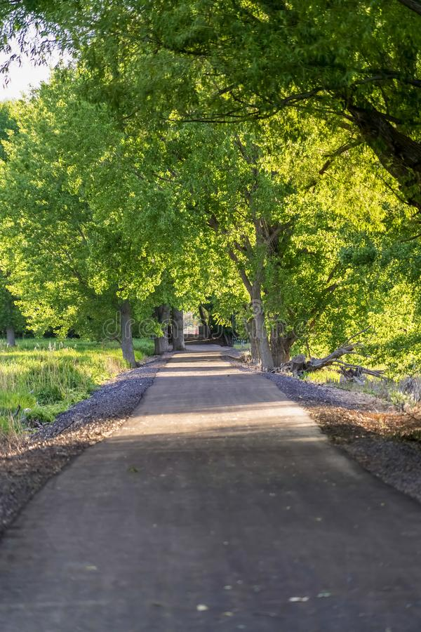 Paved road running under a vibrant green canopy of tree leaves on a sunny day stock photo
