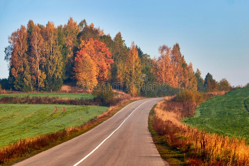Paved road surrounded by trees during peak colors of Autumn royalty free stock photography