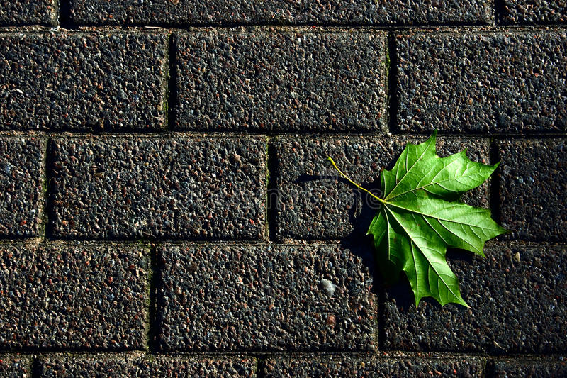 Pavement with green leaf stock image