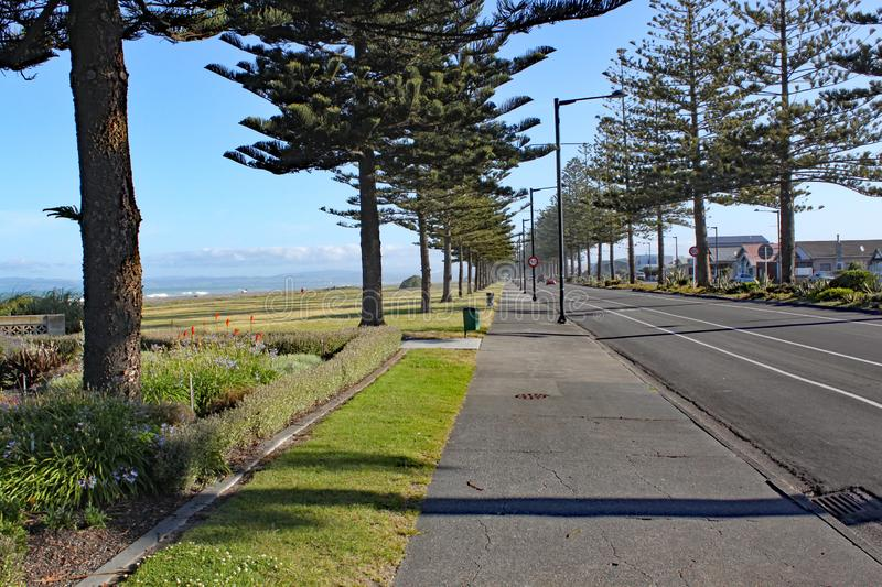 A pavement lined with conifer trees by the beach in Napier, New Zealand stock images