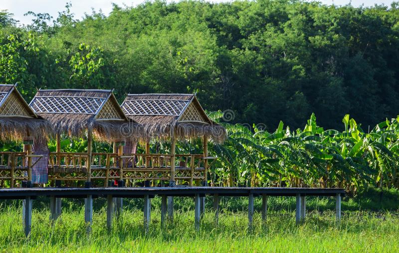 Pavilhão de bambu, natureza de relaxamento, prado verde, exploração agrícola da banana foto de stock royalty free