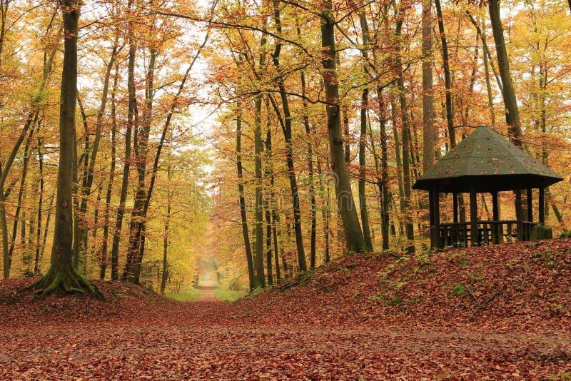 Paviljoen in het bos royalty-vrije stock foto's