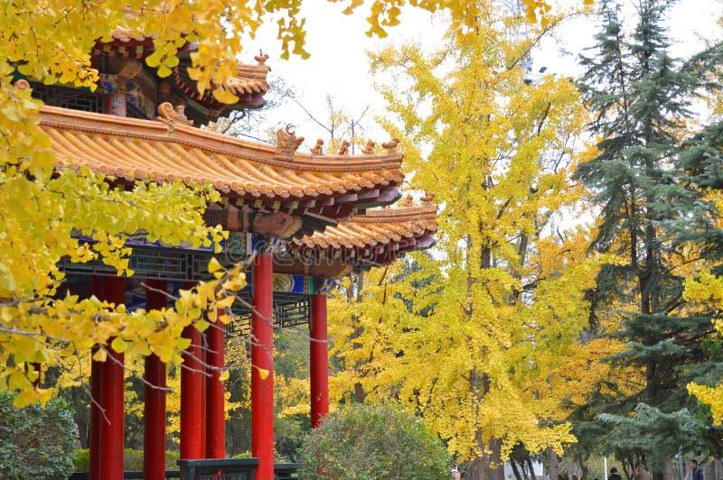 Pavillon de chinois traditionnel au parc en automne image libre de droits
