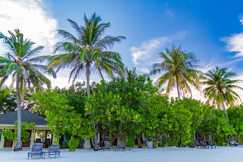 Pavillon maldivien de plage avec des arbres de noix de coco image stock
