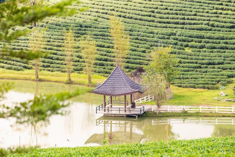 Pavillon und Teich an den Plantagenterrassen des gr?nen Tees am Berg thailand stockfoto
