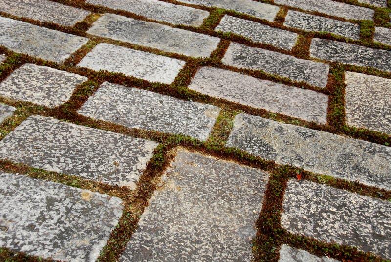 Pavimentación del musgo foto de archivo