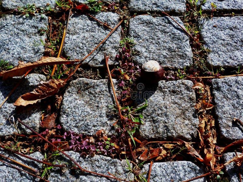Pavimentadoras de piedra del granito en la caída con la castaña fotos de archivo