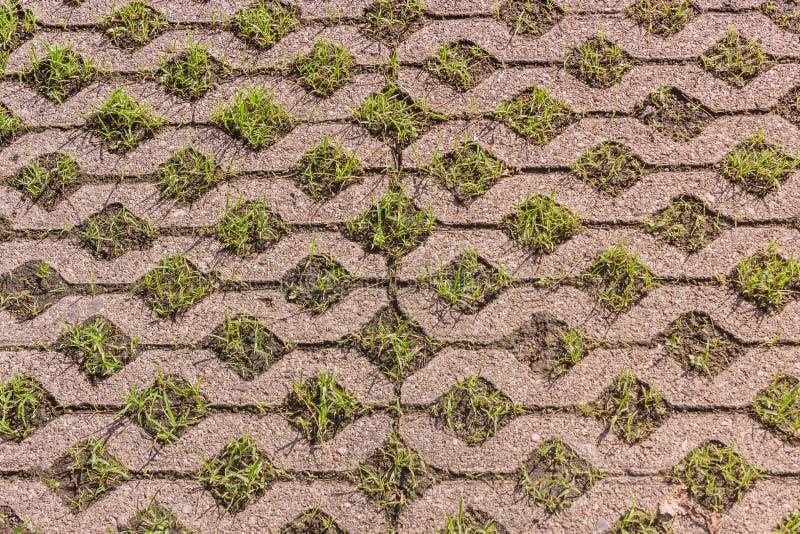 Pavimentadoras del bloque de cemento del césped cubiertas con el crecimiento de la hierba verde imágenes de archivo libres de regalías