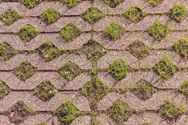 Pavimentadoras del bloque de cemento del c?sped cubiertas con el crecimiento de la hierba verde fotografía de archivo