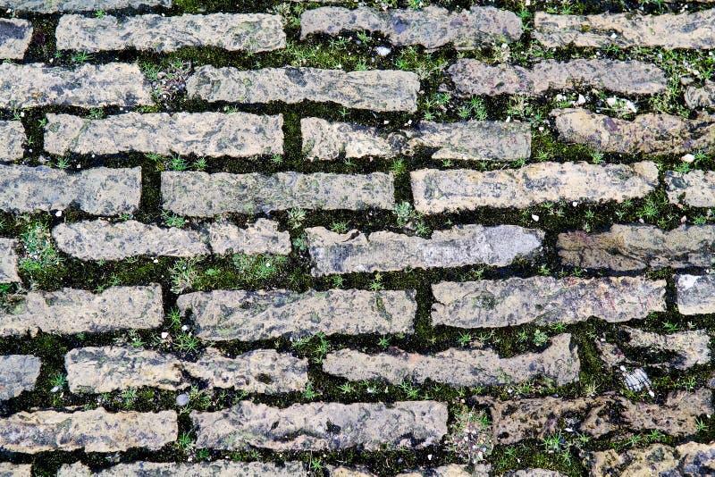 Pavimentazione del Cobblestone invasa con muschio fotografia stock libera da diritti