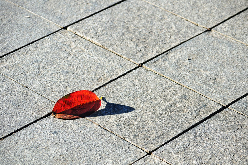 Pavimentazione del Flagstone con il foglio arrossato del faggio immagine stock libera da diritti