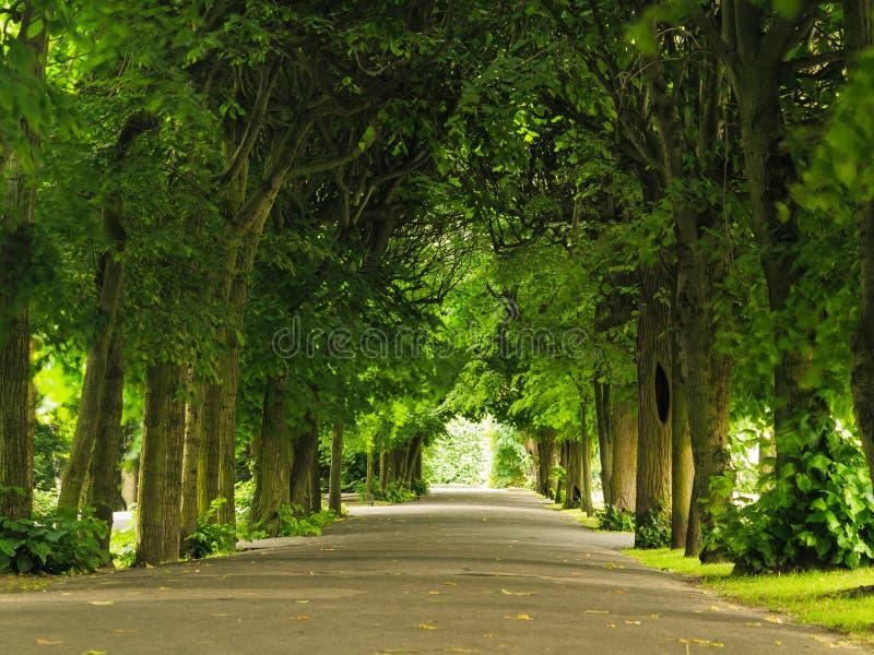 Pavimentazione di camminata del marciapiede in parco Paesaggio della natura immagine stock libera da diritti