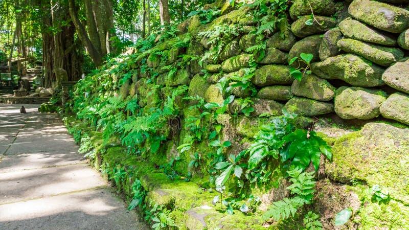 Pavimento com a parede de pedra na floresta do macaco, ubud fotos de stock