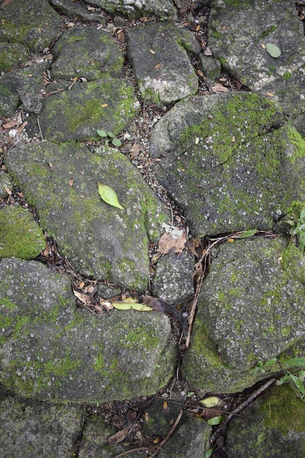 Pavimento del guijarro con la superficie cubierta de musgo fotografía de archivo libre de regalías