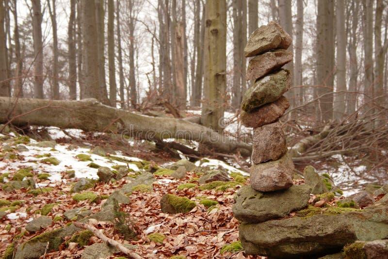 Pavimento della foresta degli alberi rotti fotografia stock