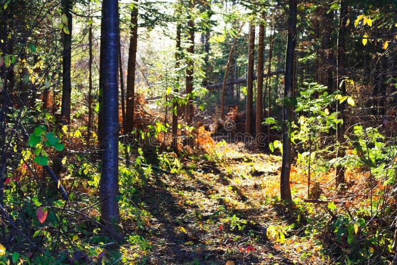 Pavimento di legni fotografie stock