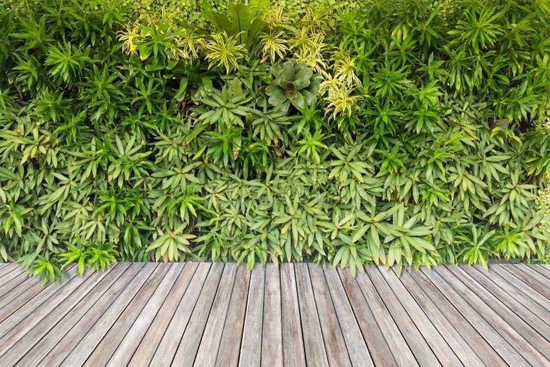 Pavimento di legno e piante verdi sui precedenti della parete fotografia stock libera da diritti
