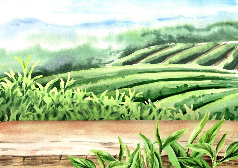 Pavimento di legno sulla piantagione di tè Illustrazione disegnata a mano dell'acquerello illustrazione vettoriale