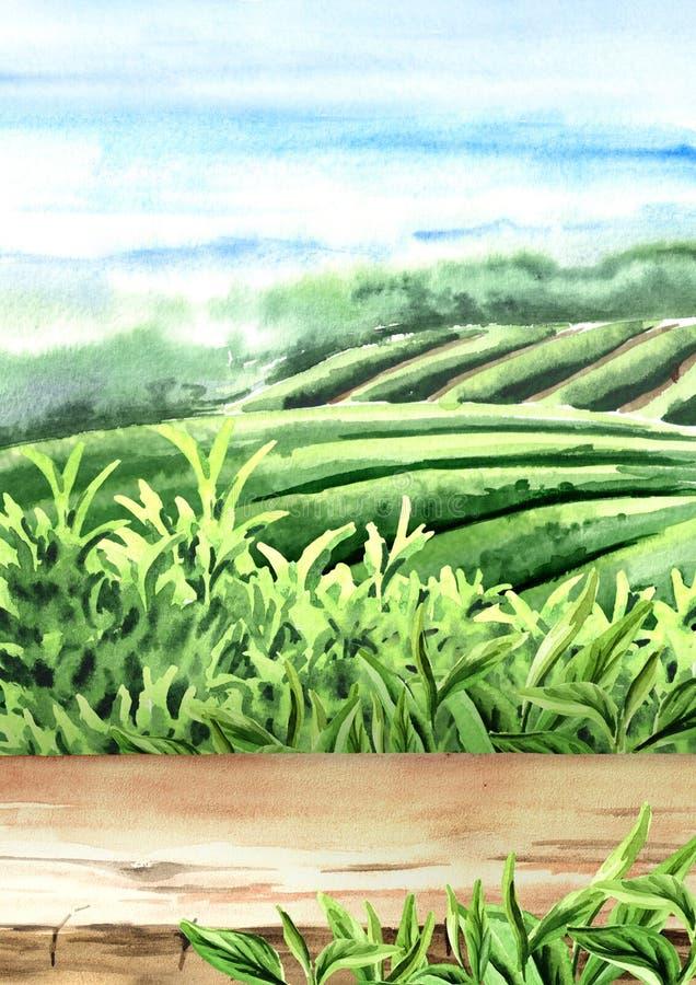 Pavimento di legno sulla piantagione di tè Illustrazione verticale disegnata a mano dell'acquerello Fondo del tè illustrazione vettoriale
