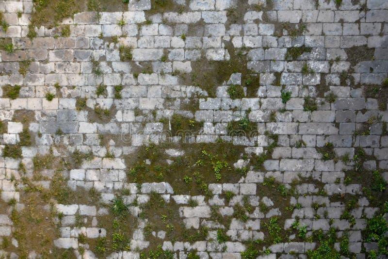 Pavimento di pietra con muschio immagini stock