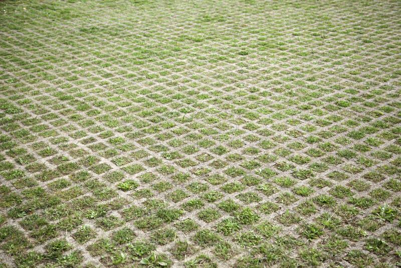 Pavimento di pietra del muschio fotografia stock libera da diritti