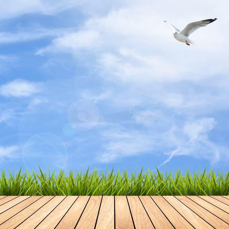 Pavimento ed erba di legno sotto il cielo fotografia stock