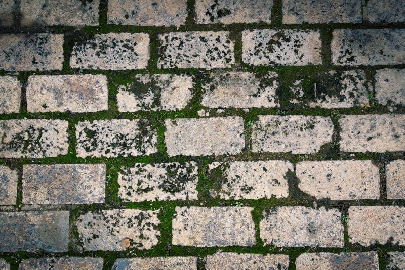 Pavimento verde del ladrillo del musgo fotos de archivo