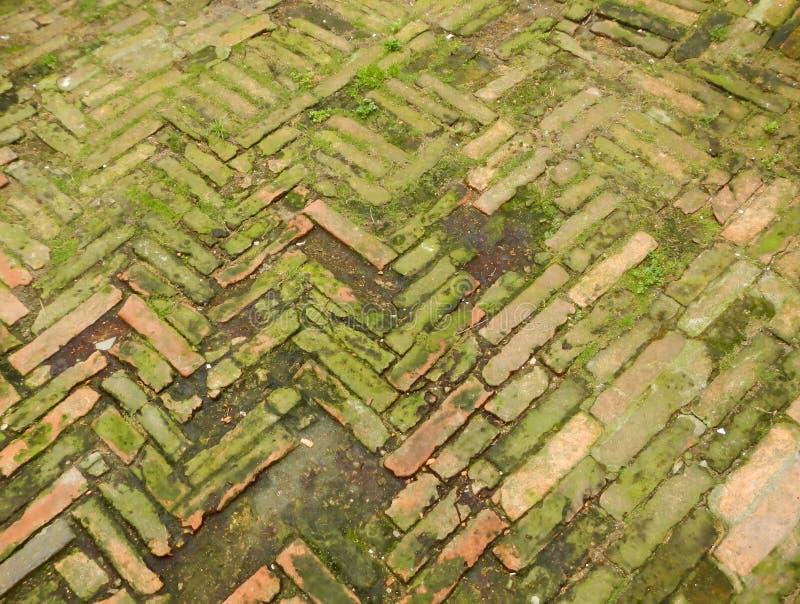 Pavimento viejo del ladrillo de la raspa de arenque, Venecia, destruida en parte, porciones de dosh fotos de archivo