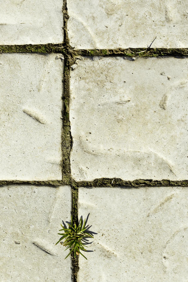 Download Paving with grass stock photo. Image of road, pavement - 41559660