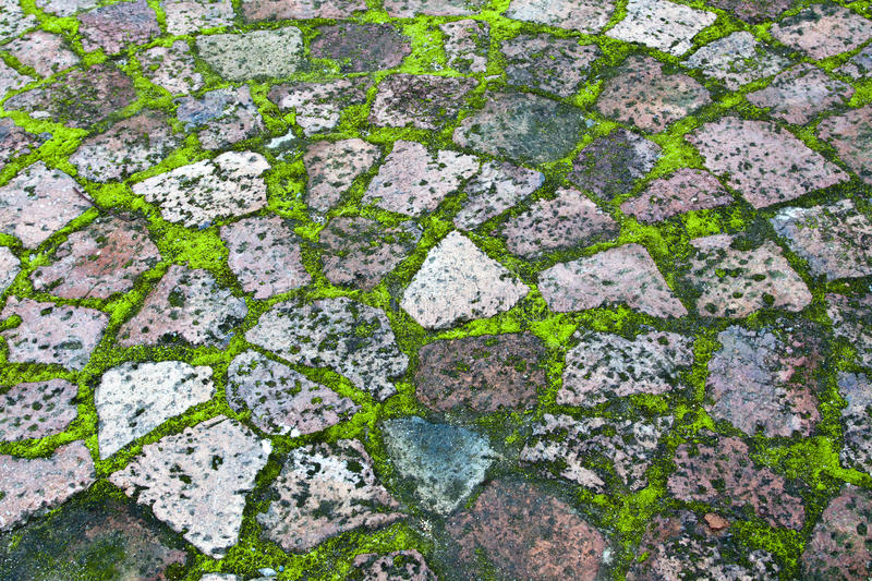 Download Paving with moss stock image. Image of textured, blocks - 25678799