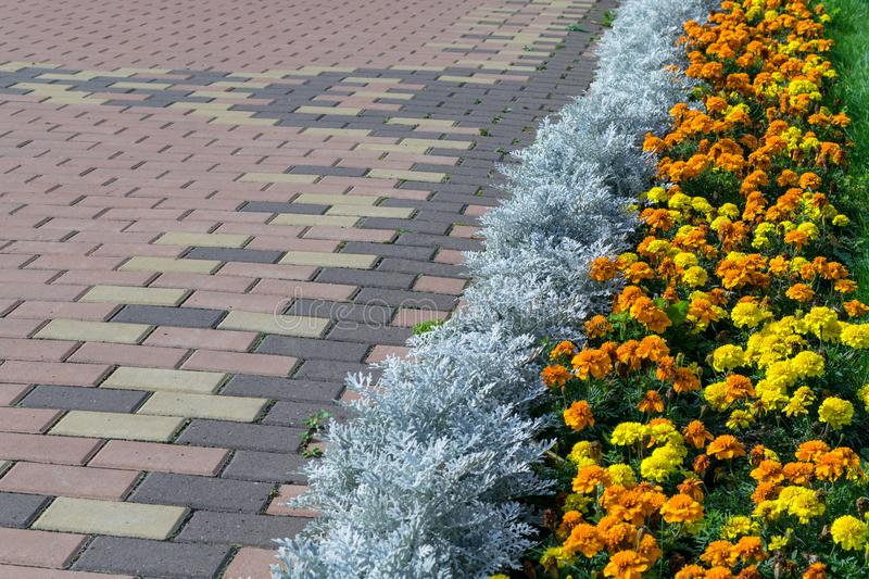 Paving pattern with rectangular shape and brown color. Along paved walkways planted flowerbed with beautiful orange and yellow flowers. In the background, lawn royalty free stock photo