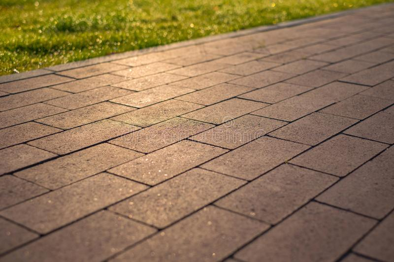 Paving slabs and grass lawn in the reflection of the rising sun.  stock photography
