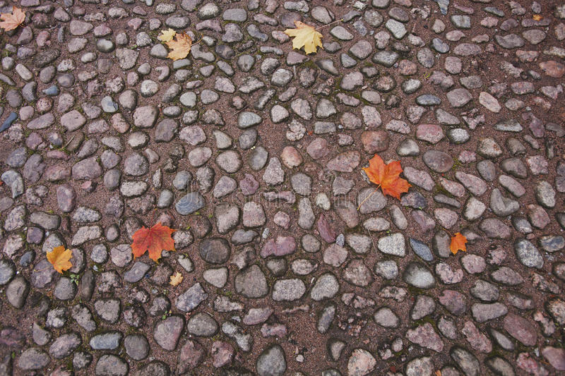 Paving stone autumn texture. Old paving stone autumn texture. Abstract background stock photography