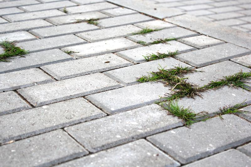 Paving stones with grass growing between the stones. The concept of nature`s victory over the city. Force of nature stock photos